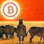 bitcoin afryka